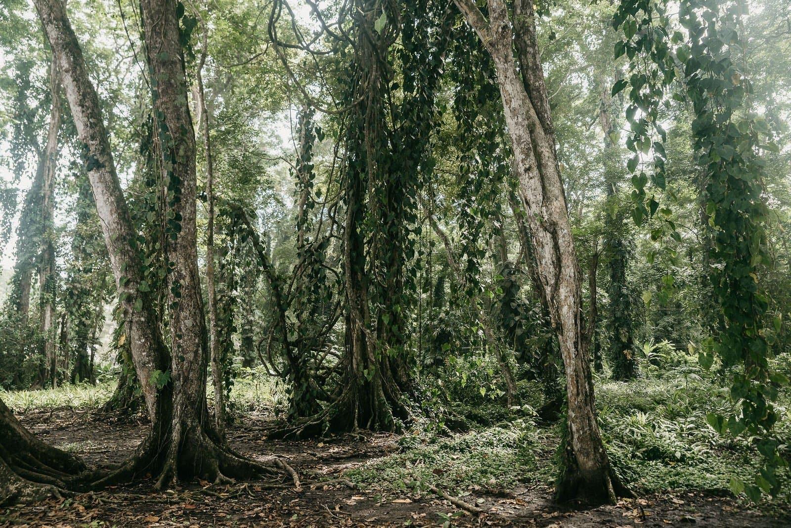 costa rica jungle.