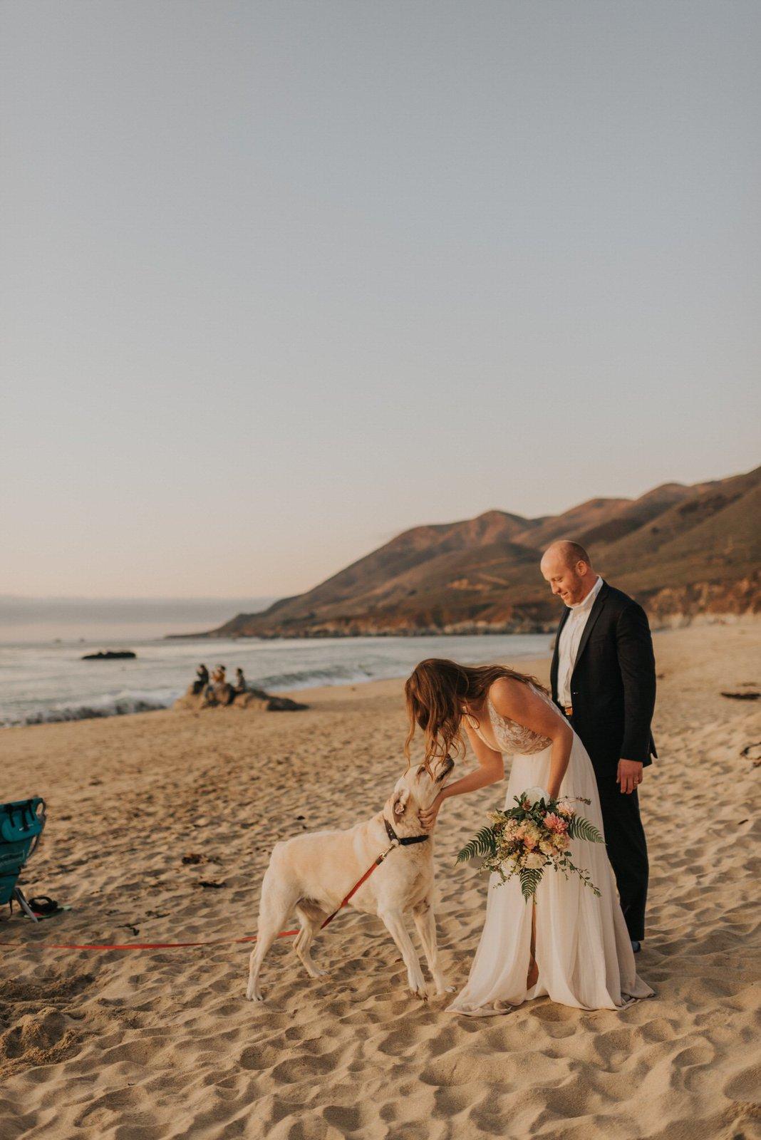 bride petting dog.