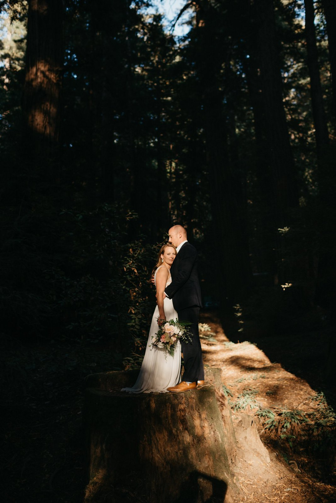 sunlight pictures in the Redwoods