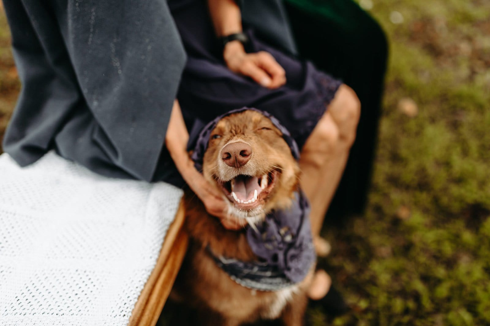 dogs during elopement