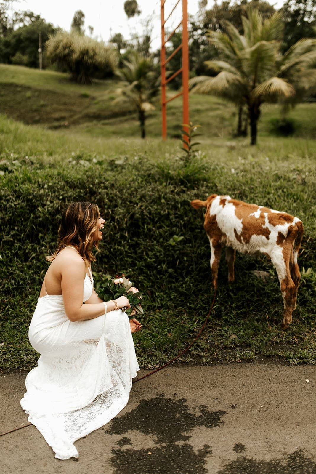 bride and cow during wedding